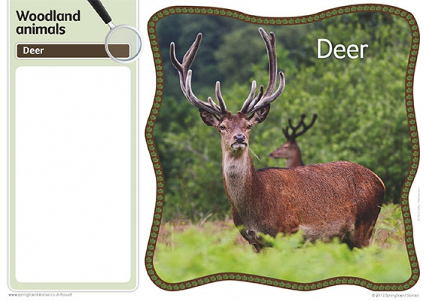 Woodlands fact cards – image