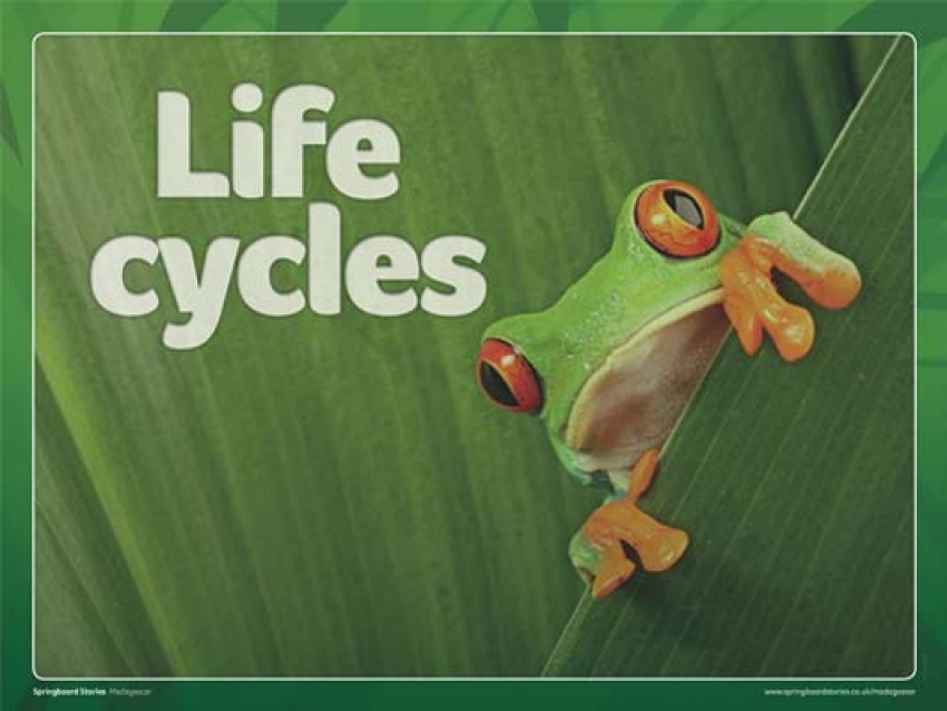Life cycle slideshow