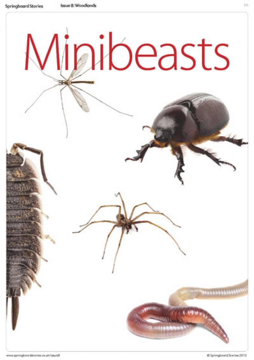 All about minibeasts primary resource