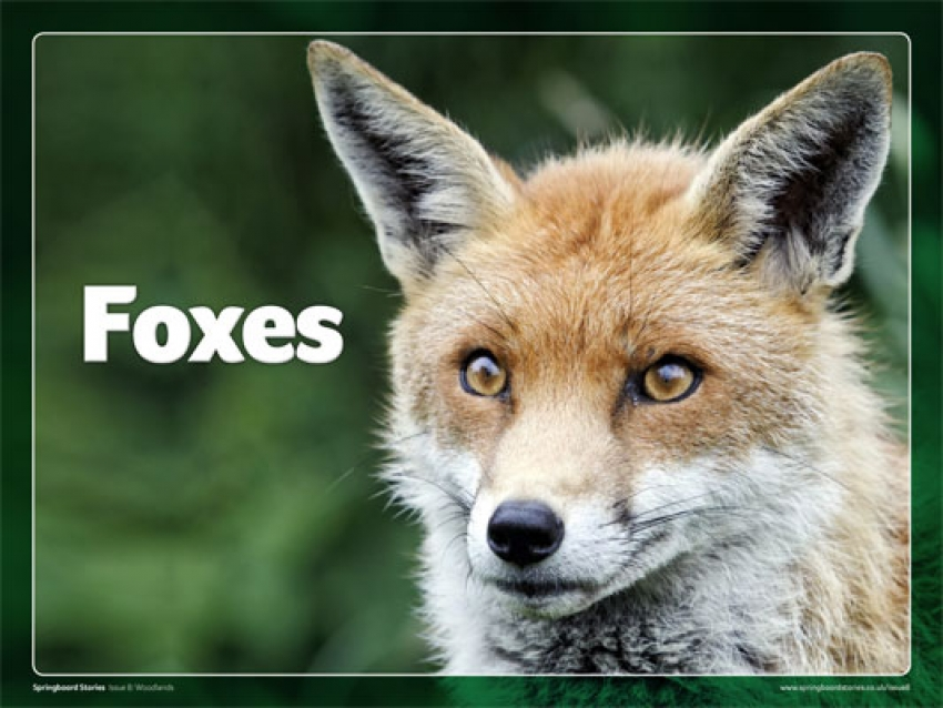 Foxes slideshow