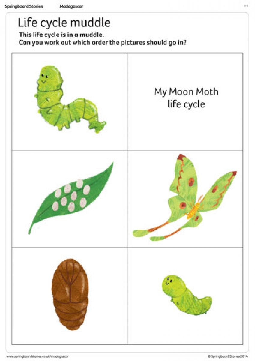 Life cycle muddle